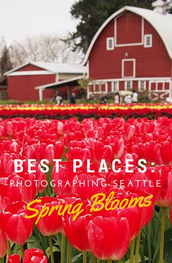 Best-places-to-photograph-Seattle-spring-blooms