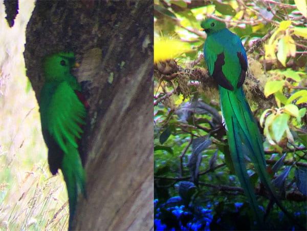 Quetzal-001