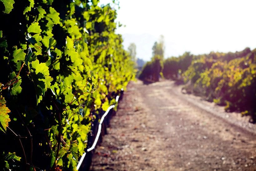 Francis-Ford-Coppola-Winery-016