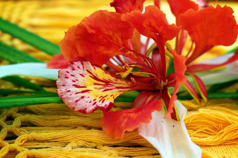 Hacienda Petac Best Flan recipe