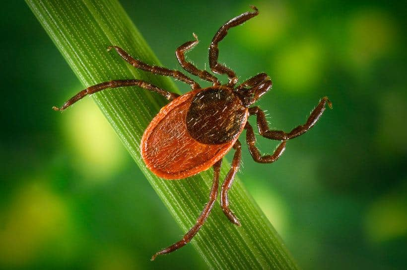 Lyme Disease in Children