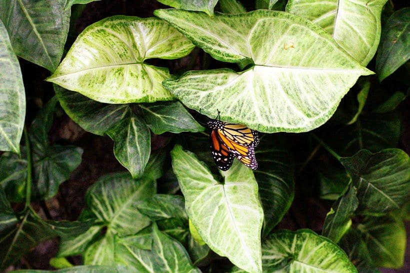 Warm up with the butterflies this winter at the Pacific Science Center.