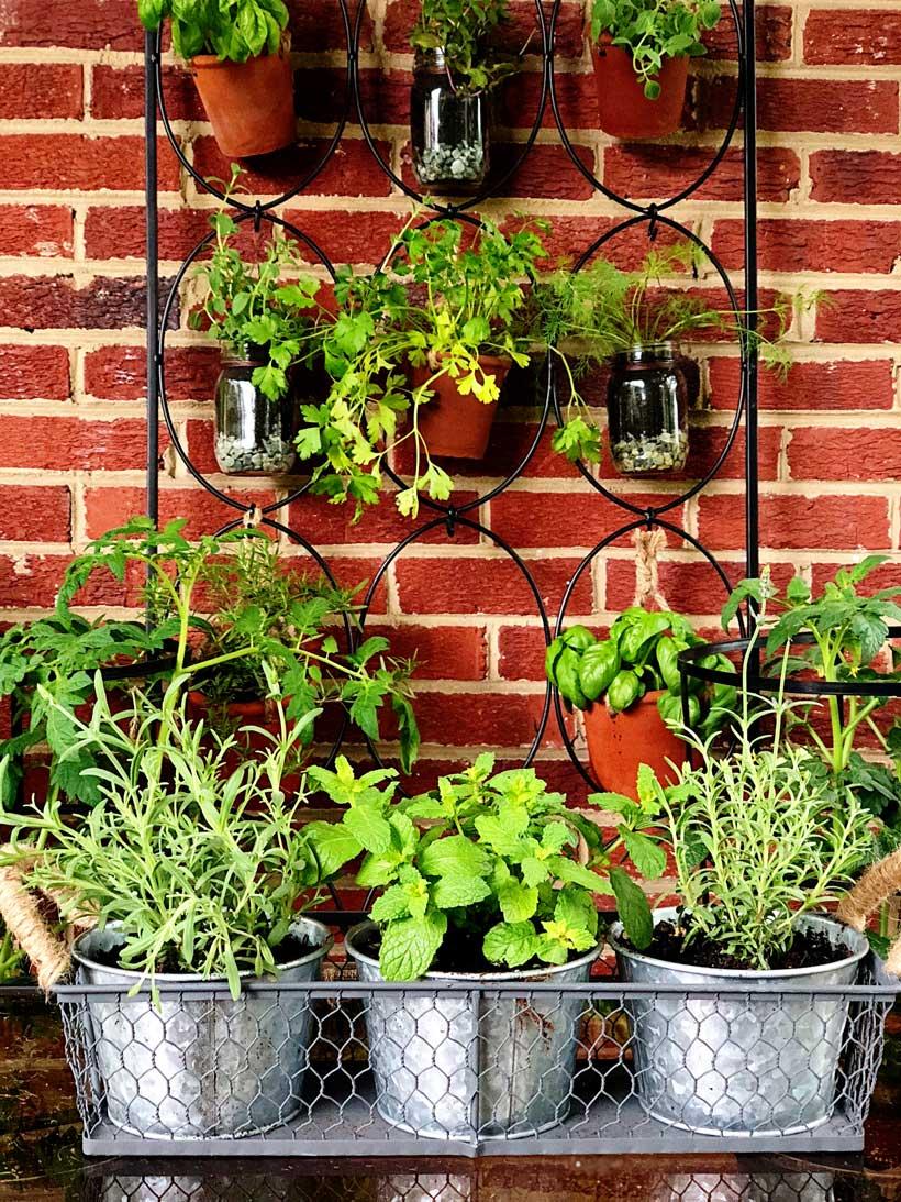 Organic hanging herb garden