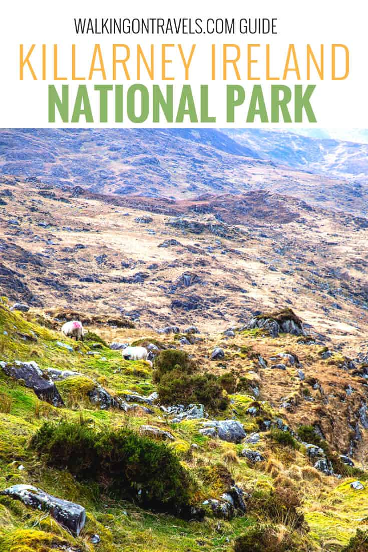 Discover Killarney National Park with this guide to all of the things to do while you explore the Ring of Kerry in Ireland, including how to get to Torc Waterfall, Muckross House, Kenmore, what lakes you will see and other must-see stops along the way. #ireland #killarney #nationalpark