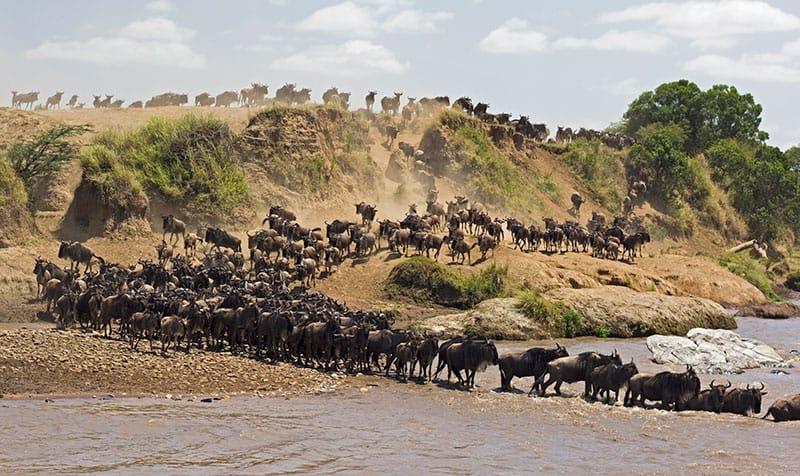 Travel Destinations Thomson Safari