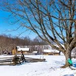 Maple Syrup Somerset PA Maple Camps