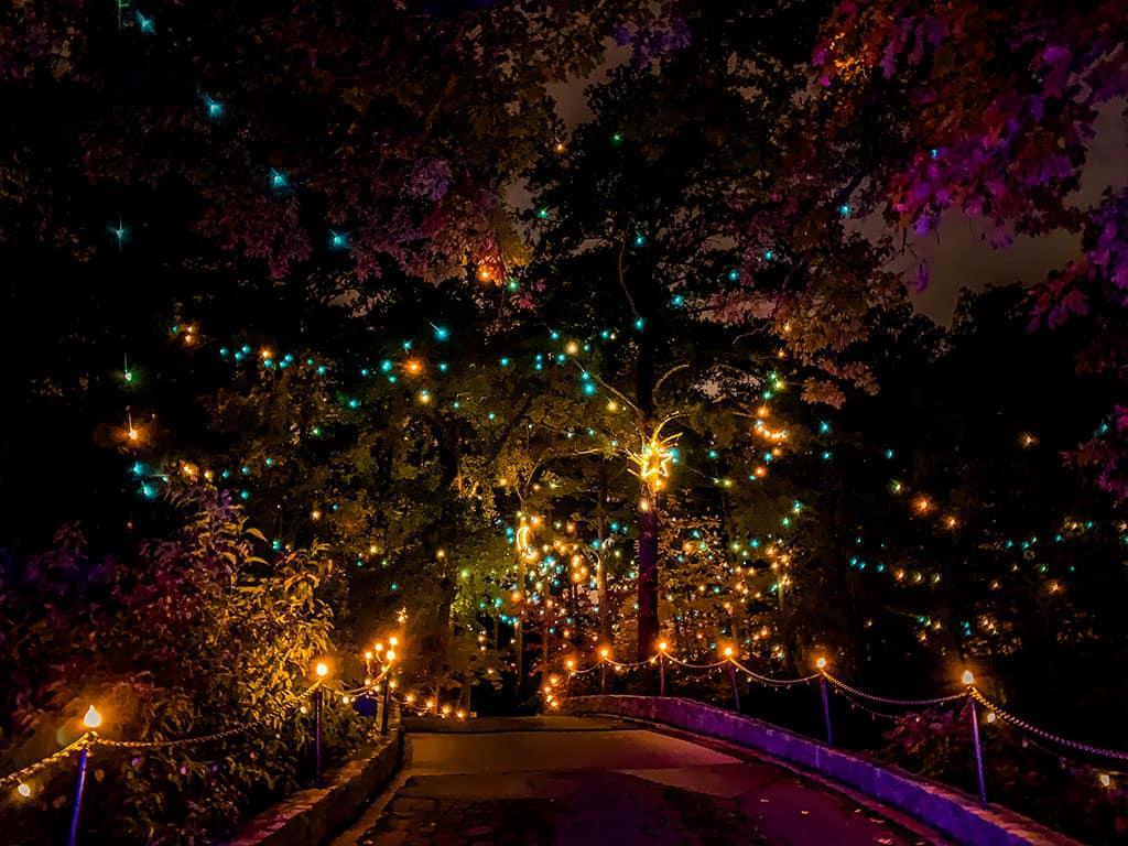 Million Bulb Walk at the Norfolk Botanical Garden