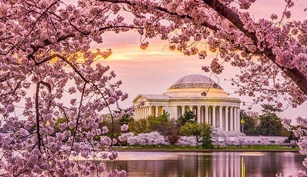 Cherry-Blossoms--Depositphotos-004