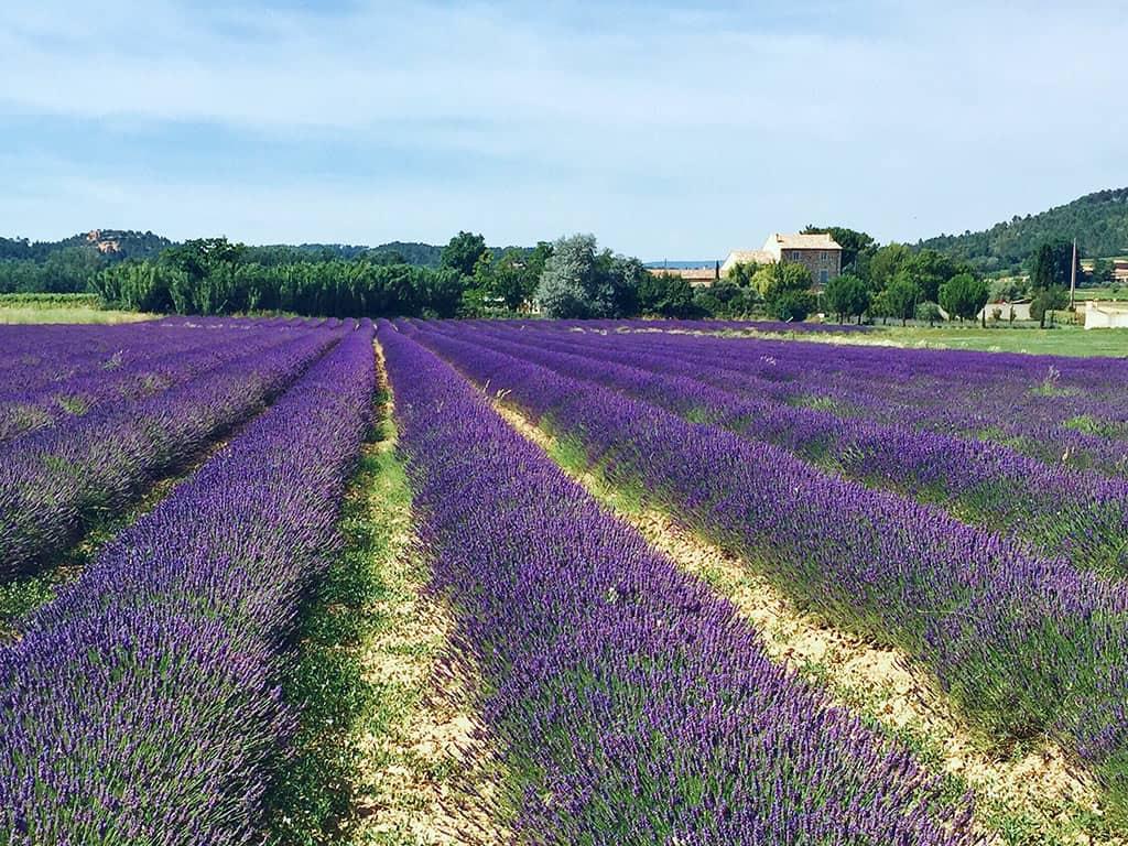 France Lavender